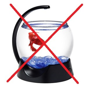 betta fish bowl